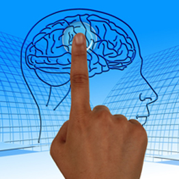 a finger pointing at a diagram of a brain